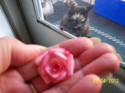 Tiny Pink Rose & My Cat Snookums