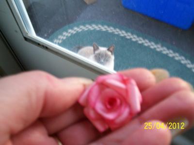 Tiny Pink Rose & My Other Cat Kimiidara